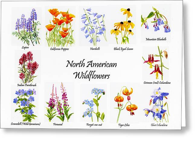 Tiger Illustration Greeting Cards - North American Wildflowers Poster II Greeting Card by Sharon Freeman