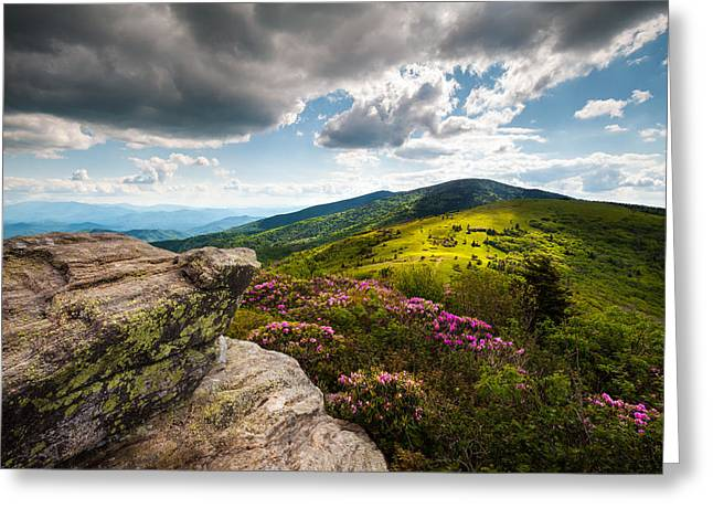 Hiking Greeting Cards - North Carolina Blue Ridge Mountains Roan Rhododendron Flowers NC Greeting Card by Dave Allen