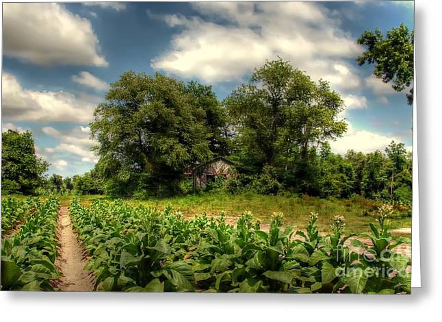 Tobacco Barns Greeting Cards - North Carolina Tobacco Farm Greeting Card by Benanne Stiens