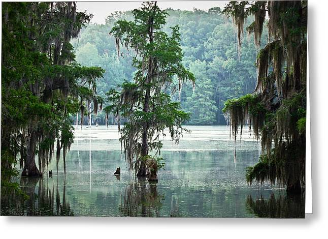 North Florida Cypress Swamp Greeting Card by Rich Leighton