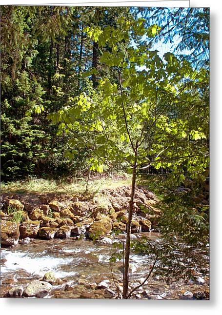 North Fork Cispus River Greeting Card by Tikvah's Hope