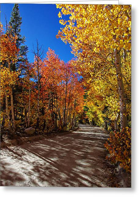 County Landscape Greeting Cards - North Lake Road Fall Colors Greeting Card by Scott McGuire