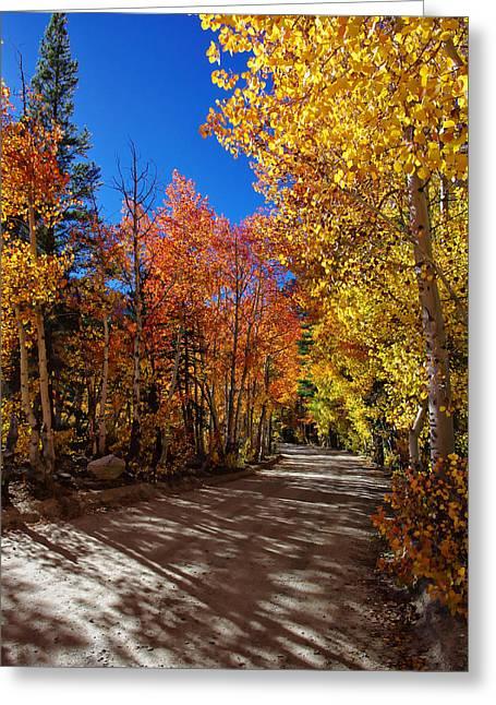 Fall Colors Greeting Cards - North Lake Road Fall Colors Greeting Card by Scott McGuire