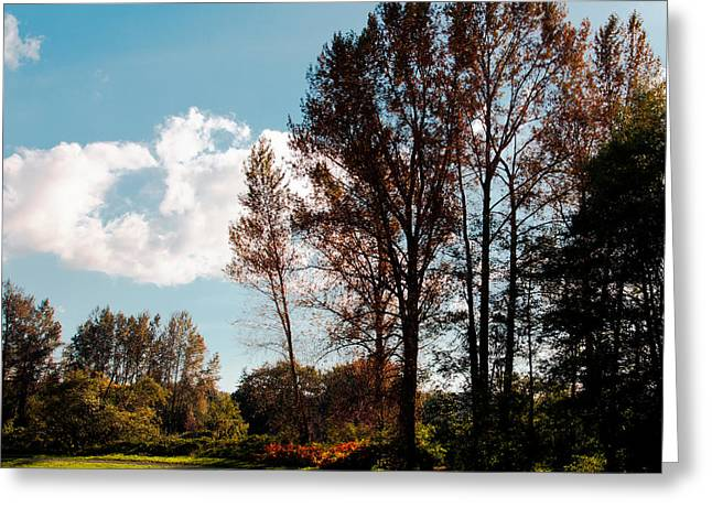 Mount Vernon Greeting Cards - North Lions Park II - Mount Vernon Washington Greeting Card by David Patterson