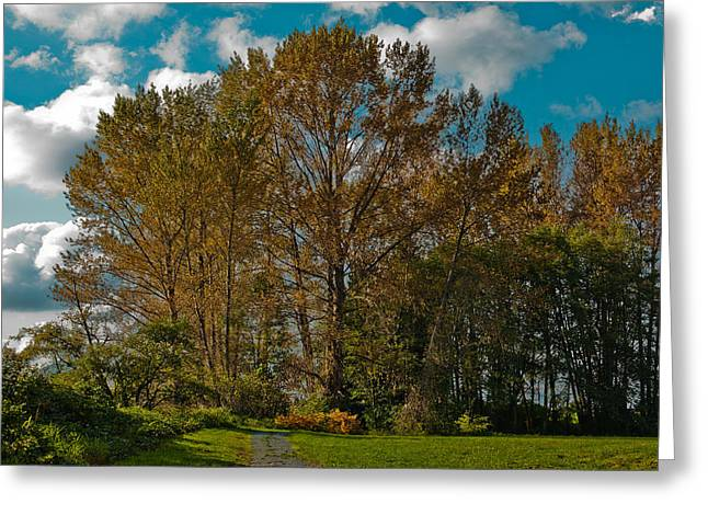 Mount Vernon Greeting Cards - North Lions Park in Mount Vernon Washington Greeting Card by David Patterson