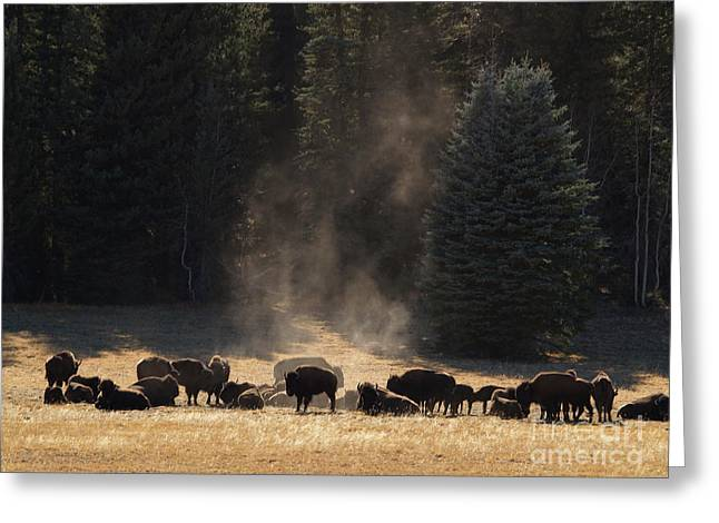 North Rim Bison of the Grand Canyon Greeting Card by Alex Cassels