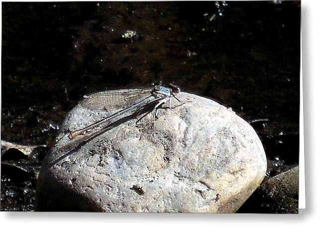 Blue Darner Dragonfly Greeting Cards - Northern Bluet Greeting Card by Chris Gudger