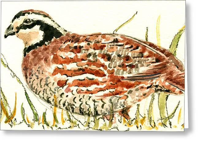 Quail Greeting Cards - Northern Bobwhite Greeting Card by Juan  Bosco