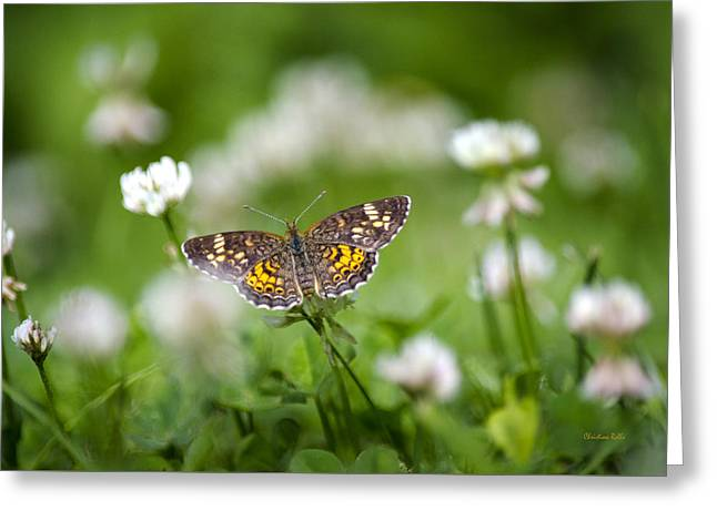 Northern Crescent Butterfly Greeting Card by Christina Rollo