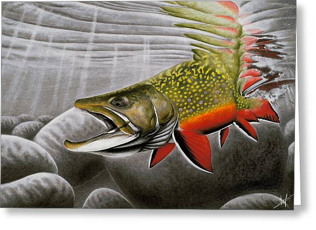 Speckled Trout Greeting Cards - Northern Exposure Greeting Card by Nick Laferriere