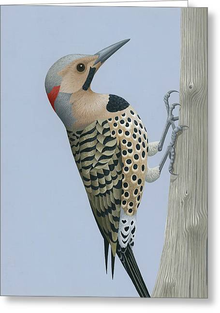 Northern Flicker Greeting Card by Nathan Marcy
