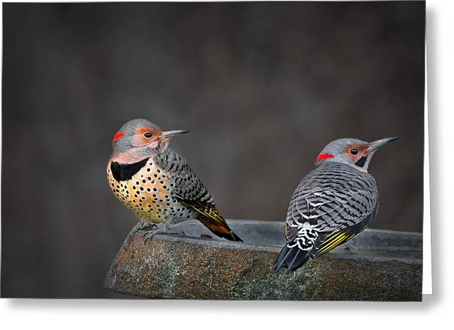 Backyard Wildlife Greeting Cards - Northern Flickers Greeting Card by Bill  Wakeley