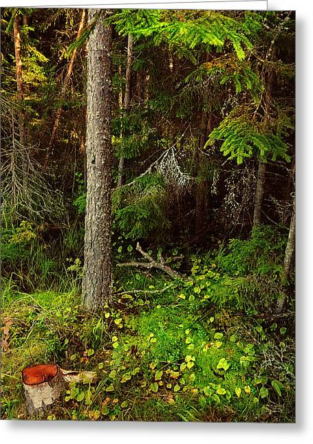 Russian Nature Greeting Cards - Northern Forest 1 Greeting Card by Jenny Rainbow