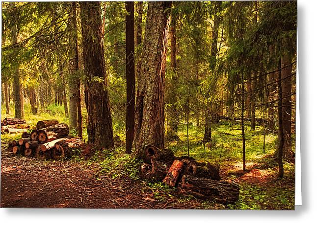 Russian Nature Greeting Cards - Northern Forest  Greeting Card by Jenny Rainbow