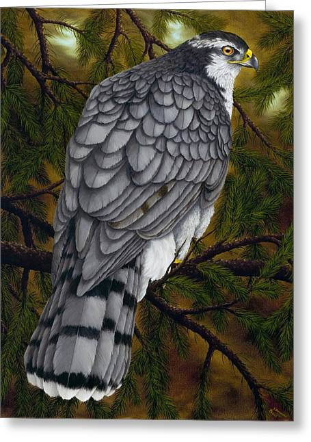 Northern Goshawk Greeting Card by Rick Bainbridge