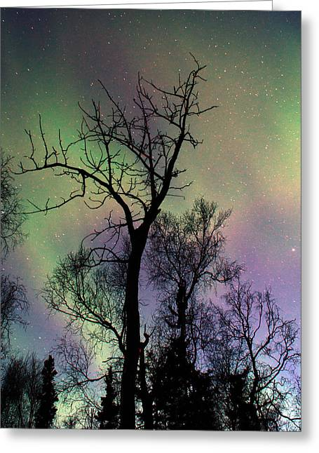 Northern Lights Cottonwood Greeting Card by Ron Day
