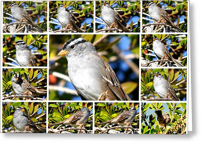 Northern Mockingbird In Bottle Brush Bush Greeting Card by Jay Milo