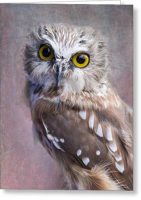Saw Greeting Cards - Northern Saw-Whet Owl Greeting Card by Angie Vogel