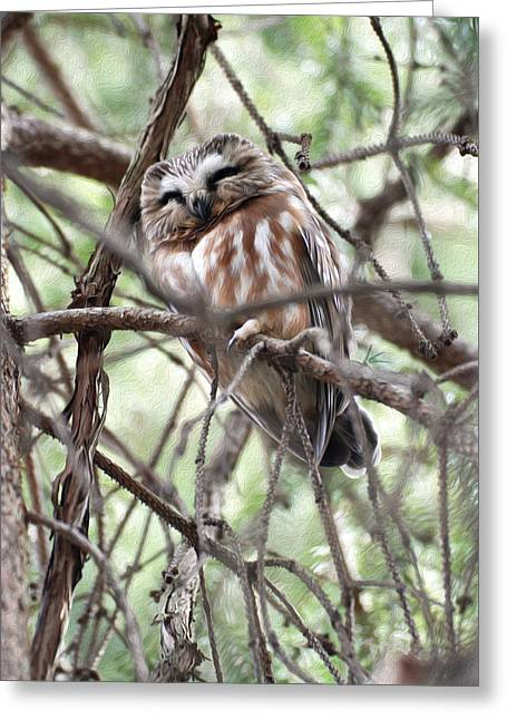 Saw Greeting Cards - Northern Saw-Whet Owl  Greeting Card by Tracy Winter