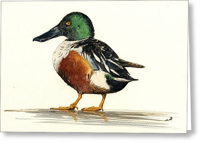 Ornithology Greeting Cards - Northern Shoveler Greeting Card by Juan  Bosco