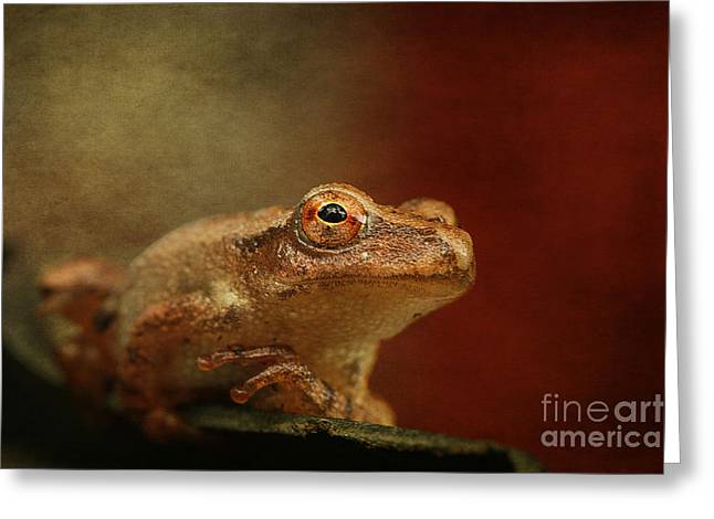 Maine Spring Greeting Cards - Northern Spring Peeper Greeting Card by Cindi Ressler