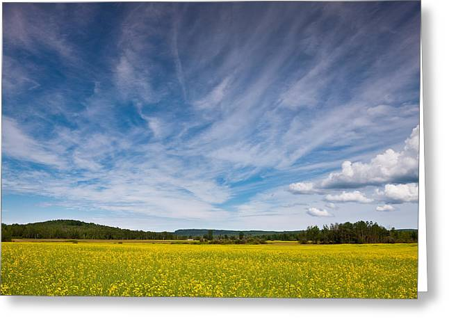 Wisconsin Greeting Cards - Northern Wisconsin Field Greeting Card by Steve Gadomski