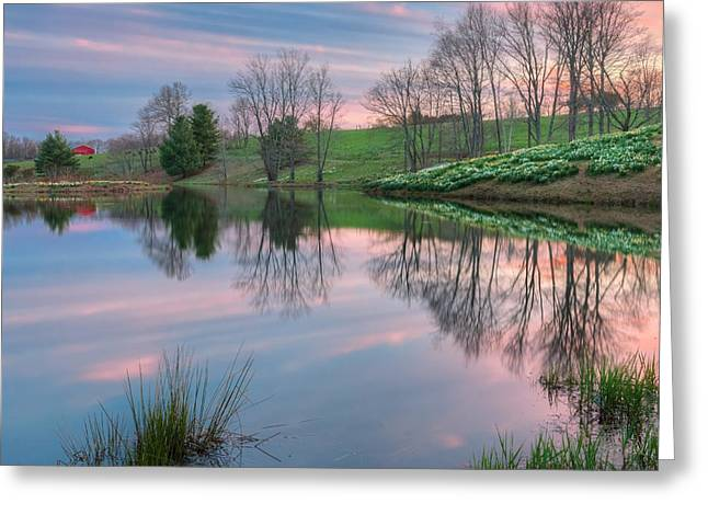 Springflowers Greeting Cards - Northfield Daffodils Sunset Greeting Card by Bill  Wakeley
