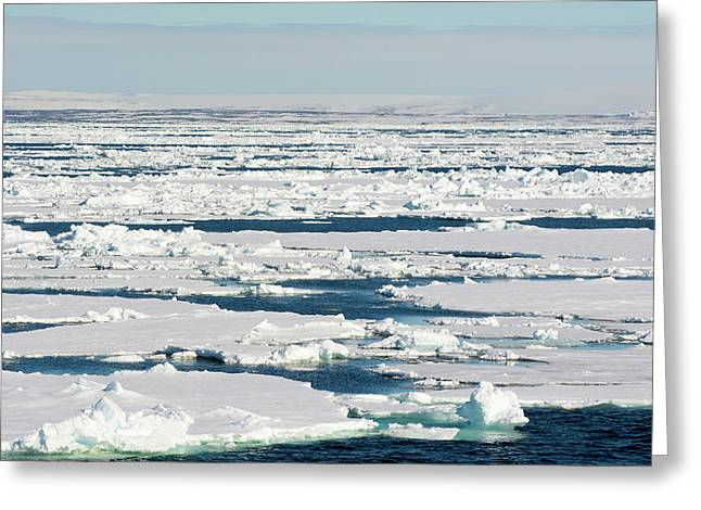 Norway Svalbard Hinlopen Strait Drift Greeting Card by Inger Hogstrom