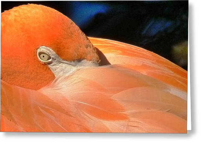 Water In Caves Greeting Cards - Nose Deep in Scarlet Feathers Greeting Card by Susan Duda