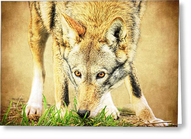 Preditor Greeting Cards - Nose in The Grass Greeting Card by Steve McKinzie
