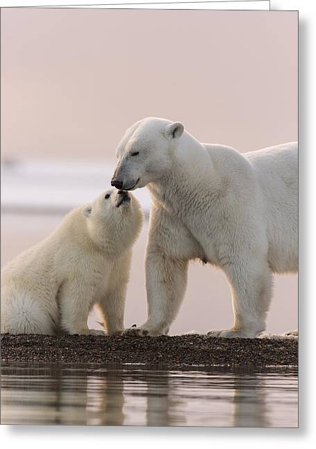 Back Lighting Greeting Cards - Nose to Nose at Sunset Greeting Card by Tim Grams