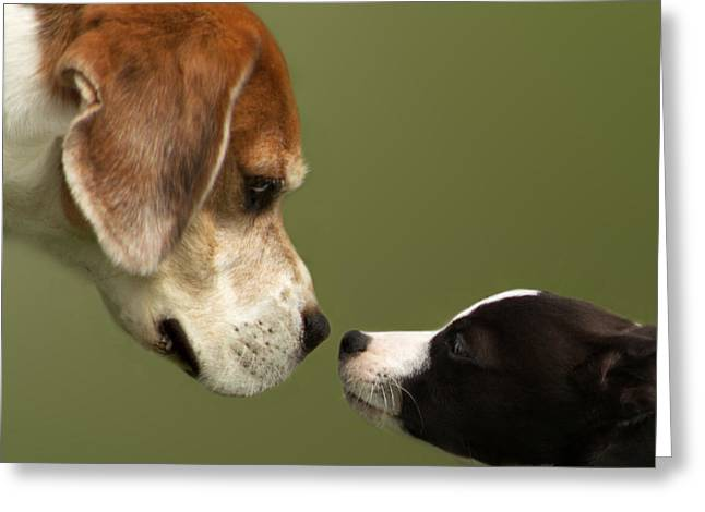 Doggies Greeting Cards - Nose To Nose Dogs 2 Greeting Card by Linsey Williams