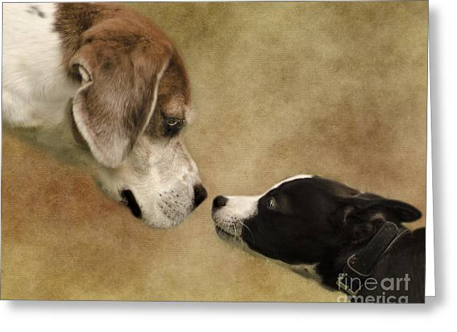Puppies Greeting Cards - Nose To Nose Dogs Greeting Card by Linsey Williams
