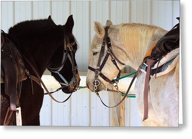 Nose To Nose  Greeting Card by Lorna Rogers Photography