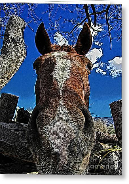 Llama Digital Greeting Cards - Nosey II Greeting Card by Jen  Brooks Art