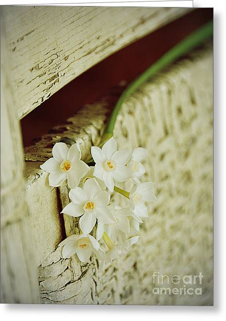 Charming Cottage Digital Art Greeting Cards - Nostalgic Paper Whites Greeting Card by Carla Parris