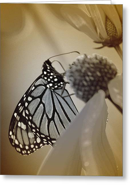 Butterfly Greeting Cards - Nostalgy Greeting Card by  The Art Of Marilyn Ridoutt-Greene