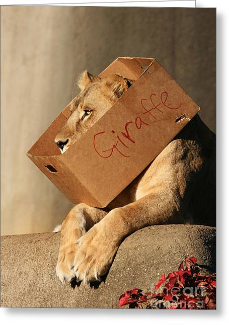 Lioness Greeting Cards - NOT a Giraffe Greeting Card by Judy Whitton