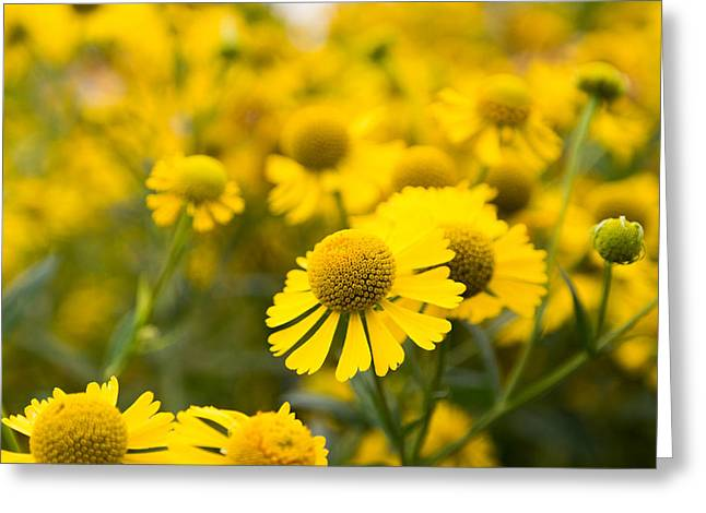 Indiana Flowers Greeting Cards - Not Alone Greeting Card by Andrew Karn