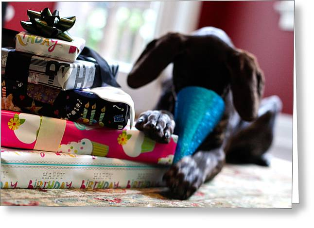 Pointer Greeting Cards - Not for Me Greeting Card by Kimberly Petts