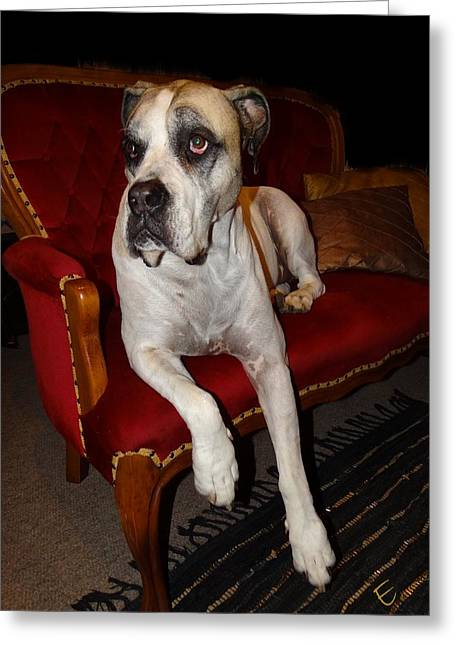 Dog On Couch Greeting Cards - Not On This Couch Greeting Card by Ernestine Manowarda
