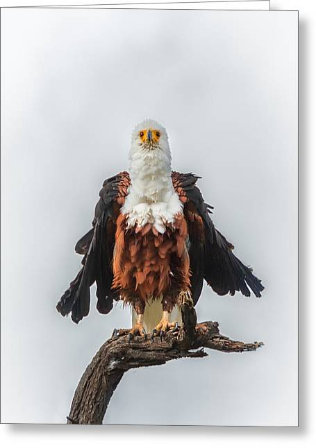 Silly Fish Greeting Cards - Not So Majestic Eagle Greeting Card by Sylvia J Zarco