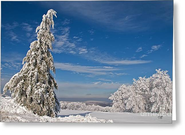 White Knob Mountains Greeting Cards - Nothing But Blue Skies Greeting Card by Lois Bryan