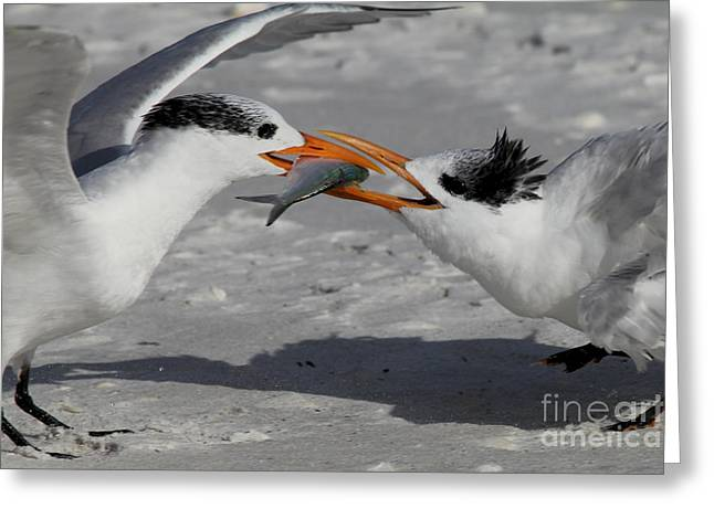 Tern Greeting Cards - Nothing Says I Love You Like a Fish Greeting Card by Meg Rousher