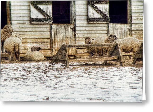 Barn Yard Greeting Cards - Nothing To Do Greeting Card by Kathy Jennings