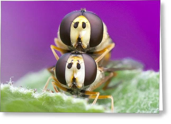 Flys Greeting Cards - Nothings private anymore is it Jeff Greeting Card by Steven Poulton