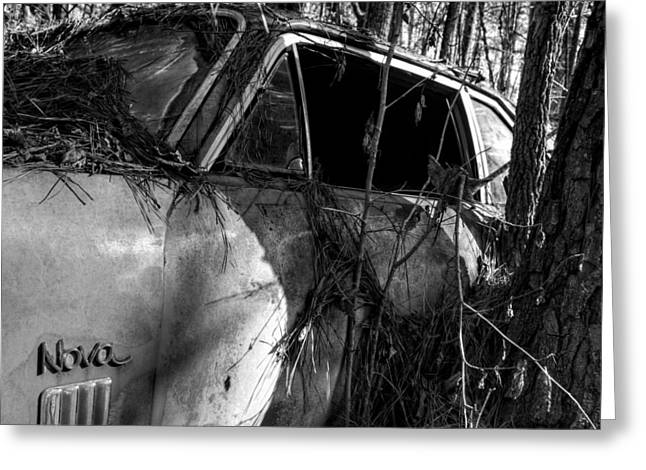 Pine Needles Greeting Cards - Nova In The Woods in Black and White Greeting Card by Greg Mimbs