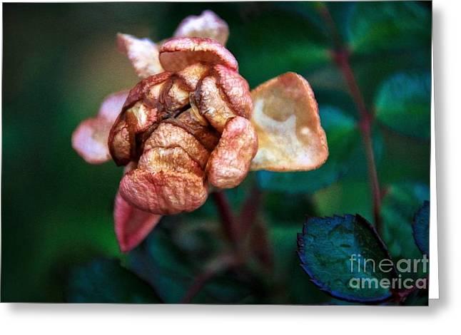 November Bloom Part 2 Greeting Card by Jill Hyland