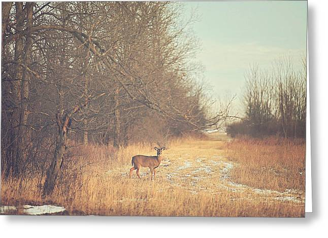 Red Deer Greeting Cards - November Deer Greeting Card by Carrie Ann Grippo-Pike