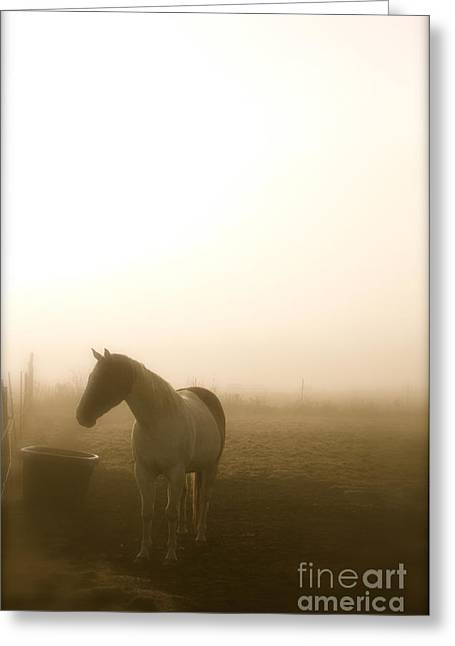 Equine Greeting Cards - November Fog 2 - Photography by Valentina Miletic Greeting Card by Valentina Miletic